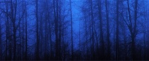 Misty Blue Forest