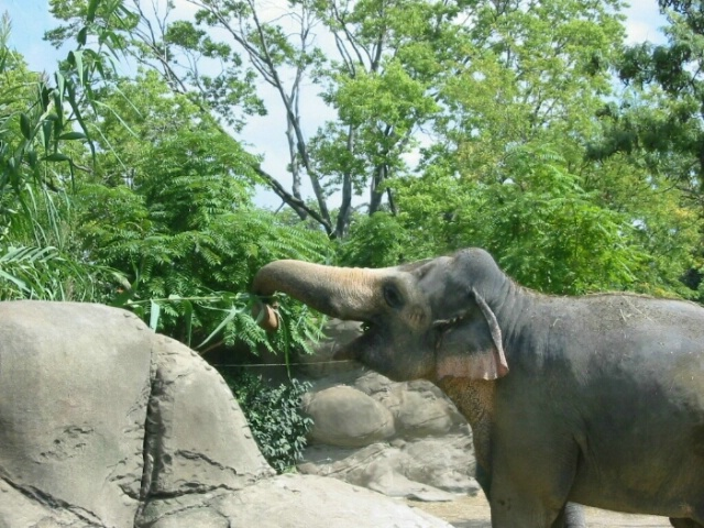 Pachyderm at Lunch - After