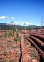 Landscape Demolition