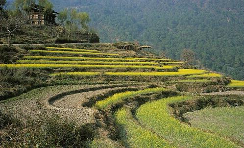 Mustard  Steps and the house, Bhutan - ID: 66495 © Govind p. Garg