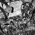 2Rhino Viper - ID: 68327 © Rhonda Maurer
