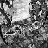 2Rhino Viper - ID: 68330 © Rhonda Maurer
