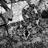 2Rhino Viper - ID: 68331 © Rhonda Maurer