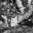 2Rhino Viper - ID: 68332 © Rhonda Maurer