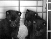 Pensive Pups