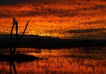 Invasion at Dawn