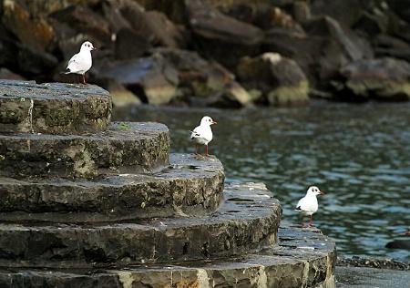 Gulls ..... stay quiet please !