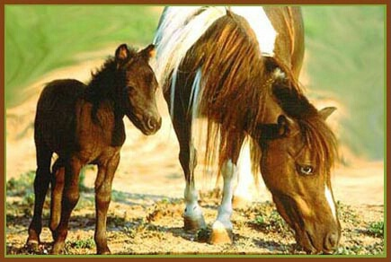 Baby Miniature Horse with Mom
