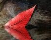 """""""Red Leaf"""""""