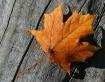 Burnished Leaf