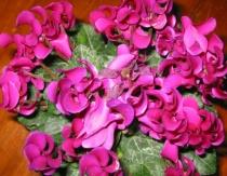 Curvy Pink