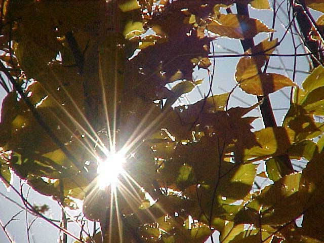 Sun Shining thru the leaves