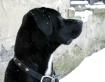 Snow watcher.