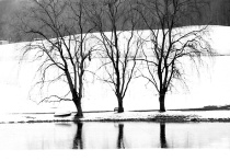 Three Trees at Marathon Farm