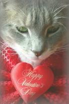HAPPY VALENTINE'S DAY BETTERPHOTO!