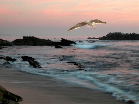 Painted Sunset with Gull