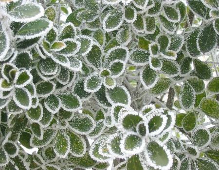 Pattern of Frost