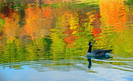 Goose on Liquid Color