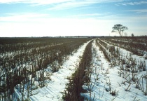 Winter Field Perspective