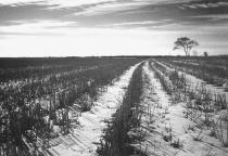 Winter Field Perspective in B&W