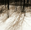 """Winter Phant..."