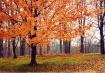 Fall Embrace