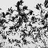 2Birds of a Feather... - ID: 90754 © Rhonda Maurer