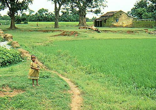 A Girl in green field