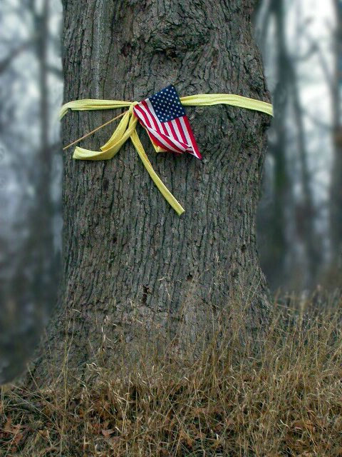 Tie  A Yellow Ribbon 'Round The Old Oak Tree