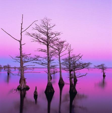 Mattamuskeet Lake and Cypress Trees