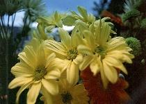 Springtime flowers and shrubs