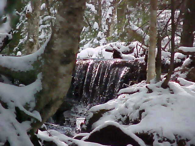 Waterfall & Trees