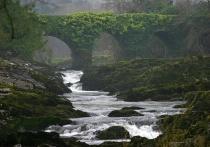 Ivy Covered Bridge