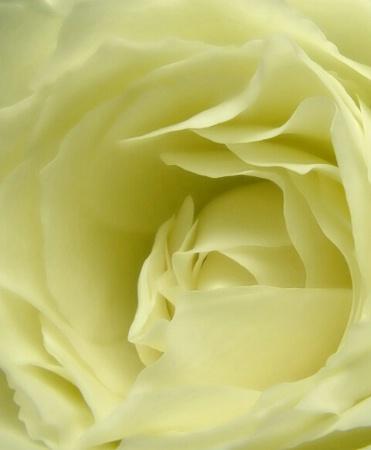 ...shy vanilla....