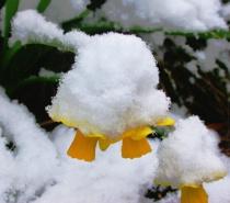 ~Snow Hat~