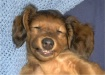 """Sweet Doggie..."