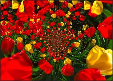 """""""Tulip Vortex"""""""