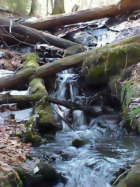 Trees Down the Waterfall