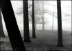 ~Winter Fog~