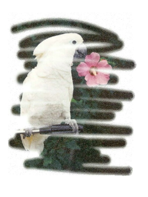 """""""Cockatoo  with Flower"""""""