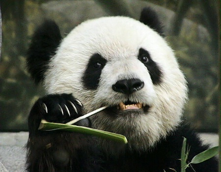 Got Bamboo