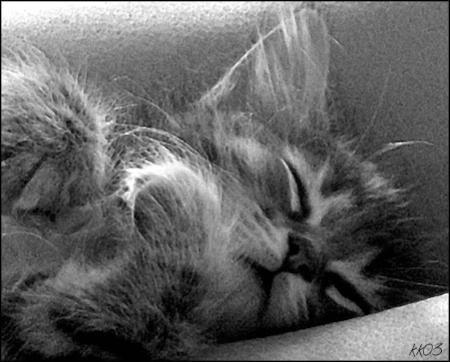 Kitten Nap