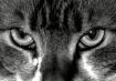 Cat-atonic