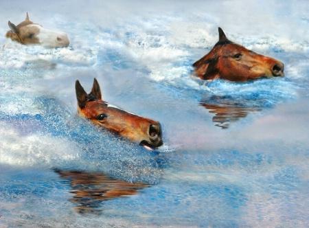 swimming horses...