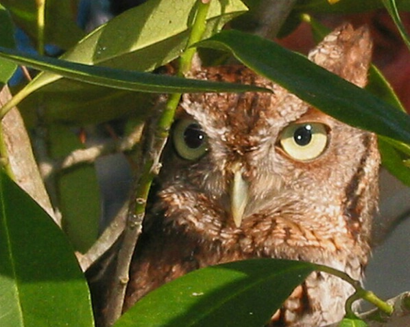 Whooo is Watching You?