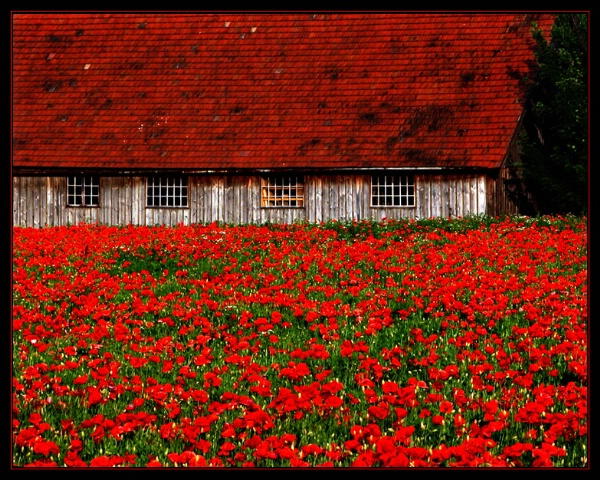 The Poppy House