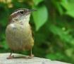 A Little Birdie.....