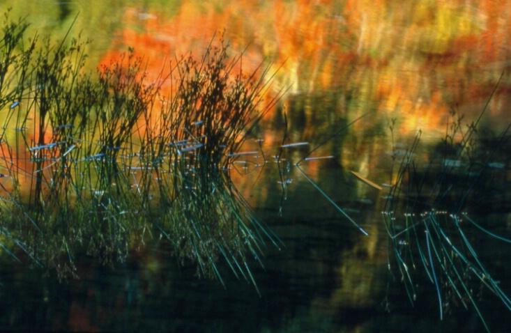 Water Reflection - ID: 130555 © Govind p. Garg