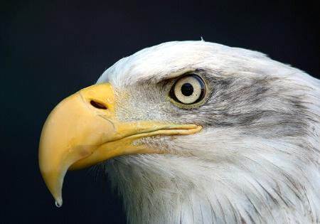 Freedom Bird