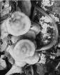 Mushroom and Worm